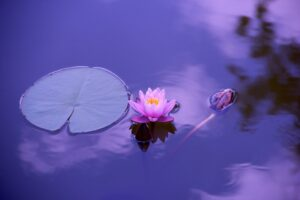 Relaxation Hypnotherapy